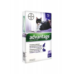 Bayer advantage 80 solution antipuce pour chat et lapin de 4kg et plus 6 pipettes